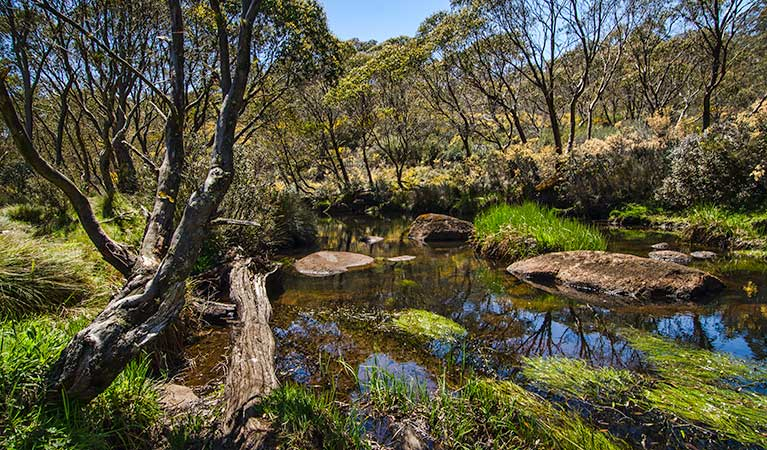 Junction Pools campground - Victoria Tourism