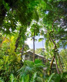 Daintree Eco Lodge and Spa - Victoria Tourism