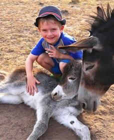 Destiny Boonah ECO Cottages and Donkey Farm - Victoria Tourism