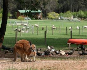 Diamond Forest Cottages and Farm Stay - Victoria Tourism