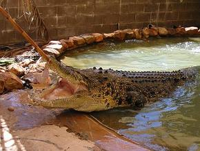 Wyndham Zoological Gardens and Crocodile Park - Victoria Tourism