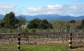 Buller View Wines - Victoria Tourism
