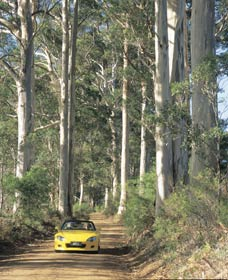 Mount Shadforth Scenic Drive - Victoria Tourism