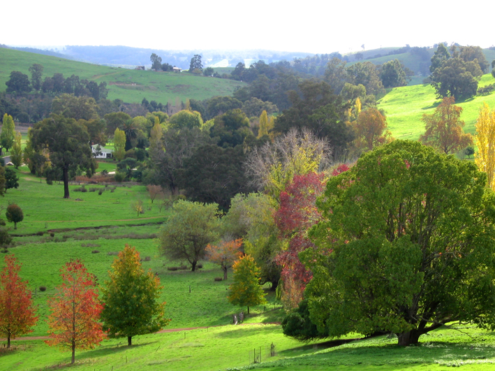 Golden Valley Tree Park - Victoria Tourism
