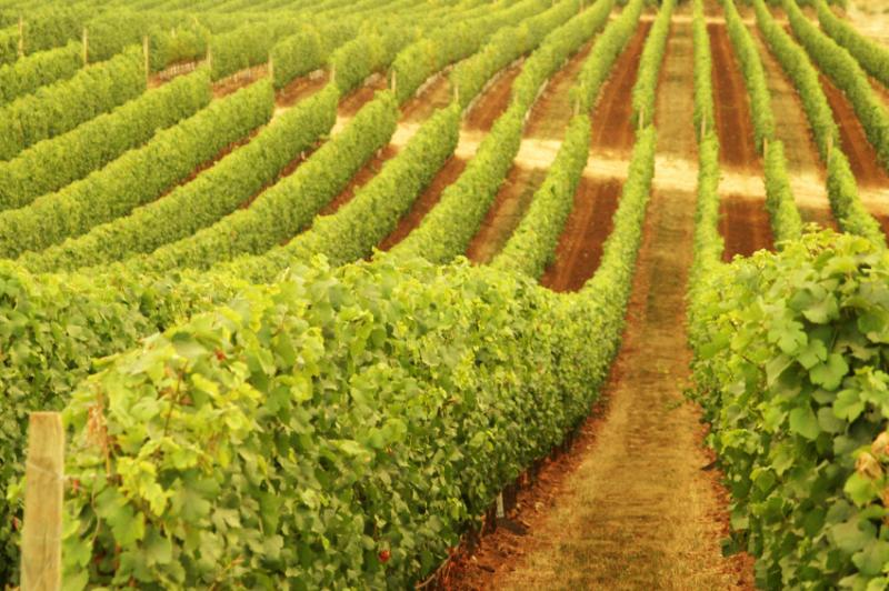 MadFish Wines Denmark - Victoria Tourism