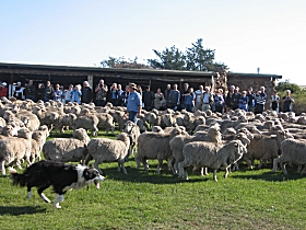 Curringa Farm - Accommodation and Farm Tours - Victoria Tourism