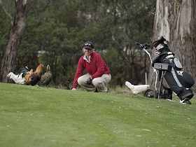 Tasmania Golf Club - The - Victoria Tourism