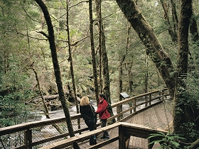 Franklin River Nature Trail - Victoria Tourism