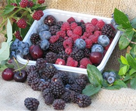 Bright Berry Farms - Victoria Tourism