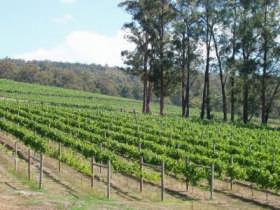 Piedmont Vineyard - Victoria Tourism