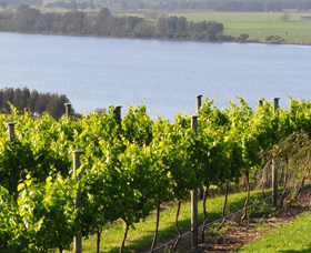 Two Figs Winery - Victoria Tourism