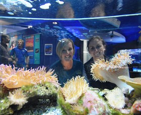 Solitary Islands Aquarium - Victoria Tourism