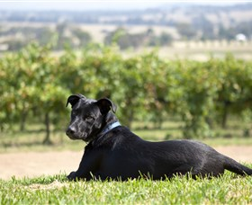 Moothi Estate Vineyard and Cellar Door - Victoria Tourism