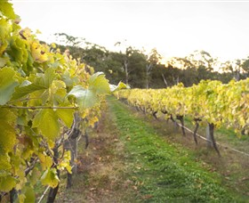 Harcourt Valley Vineyards - Victoria Tourism