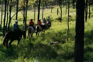 Hunter Valley Horse Riding and Adventures - Victoria Tourism
