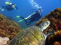 Byron Bay Dive Centre - Victoria Tourism