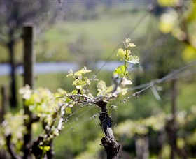 Mountainside Wines - Victoria Tourism