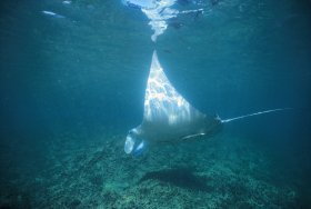 Manta Ray Bay Dive Site - Victoria Tourism