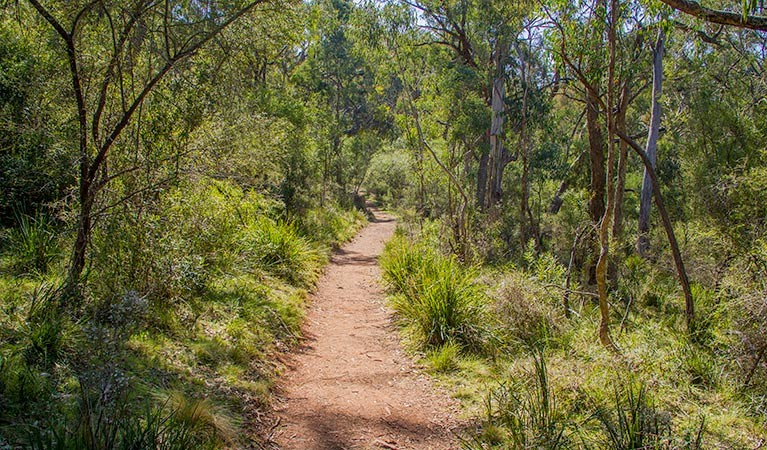 Mares Forest Creek walking track - Victoria Tourism