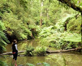 Morwell National Park - Victoria Tourism