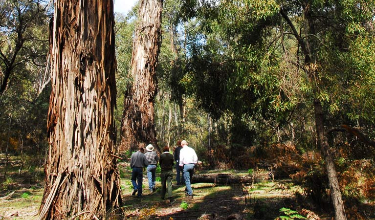 Tallaganda National Park - Victoria Tourism