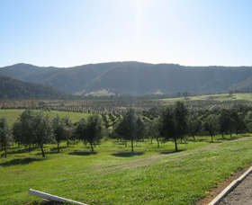 Hastings Valley Olives - Victoria Tourism