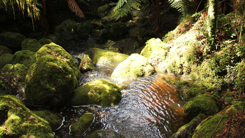South East Forests National Park - Victoria Tourism