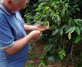 Wombah Coffee Plantation - Victoria Tourism
