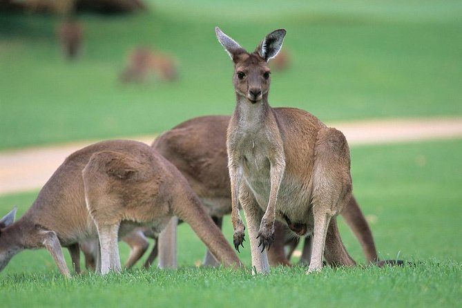 Full-Day Perth, Fremantle, Swan Valley & Wildlife Park