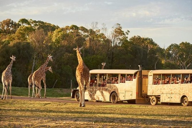 Sunset Safari at Werribee Open Range Zoo