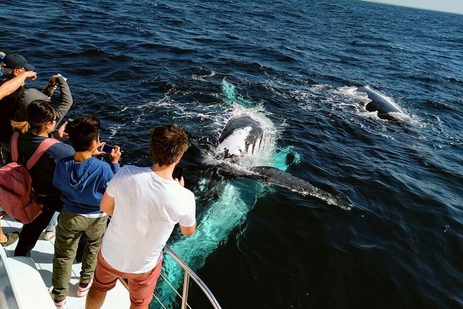 Half-Day Whale Watching and Canal Cruise from Surfers Paradise