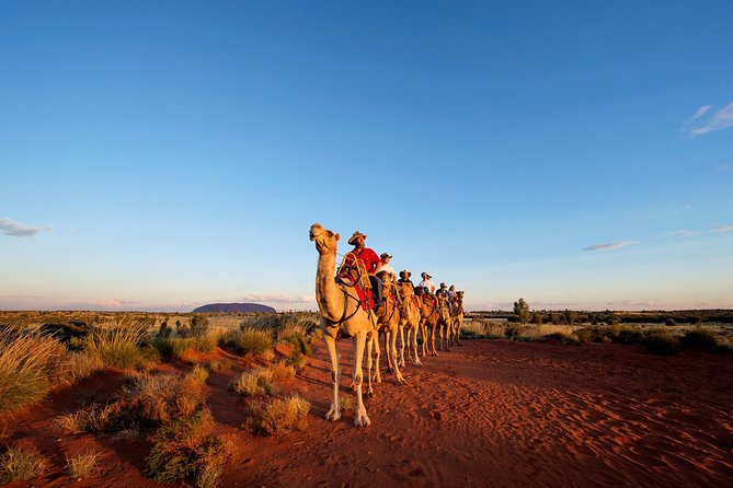 Uluru Camel Express Sunrise or Sunset Tours - Victoria Tourism