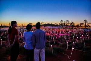 Uluru Field of Light Sunrise Tour - Victoria Tourism