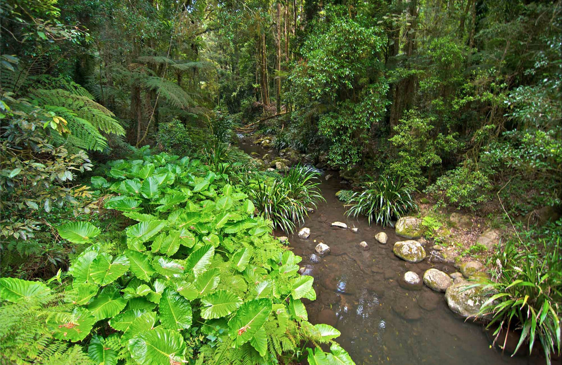 Brindle Creek Walking Track - Victoria Tourism