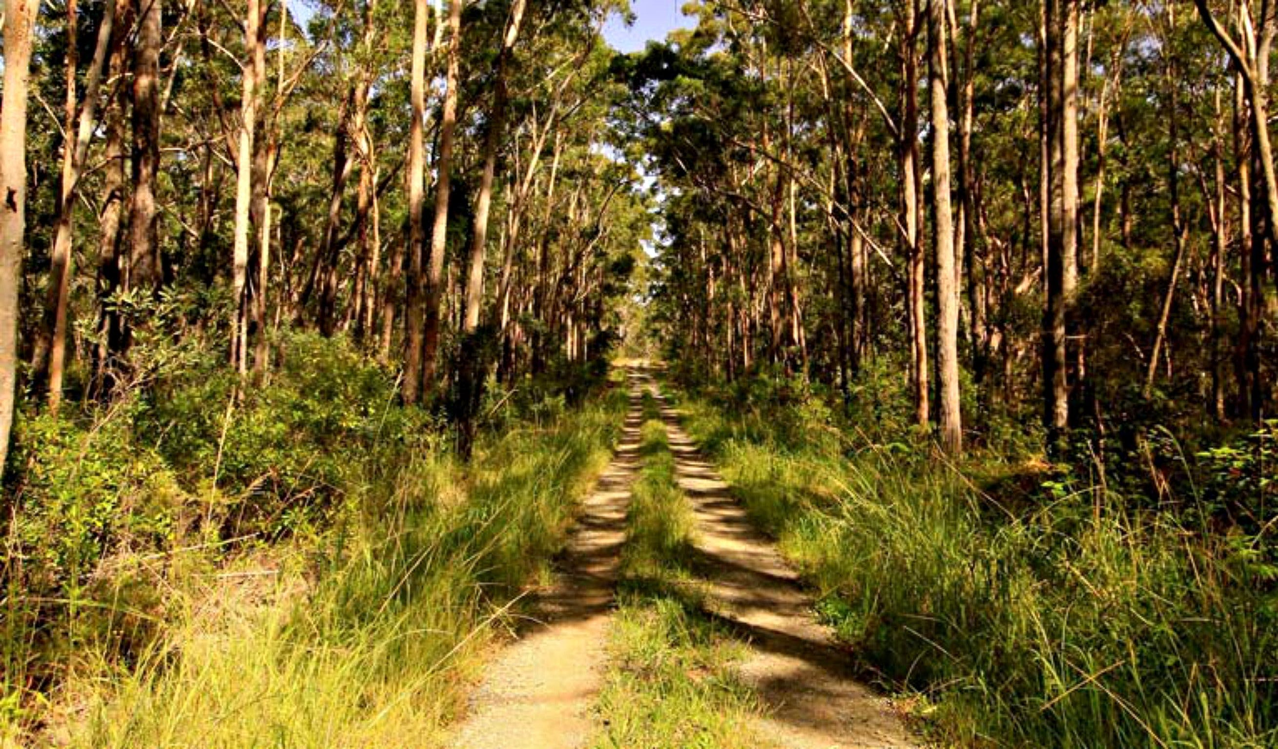Mining Road Fire Trail Old Gibber Road Rire Trail - Victoria Tourism