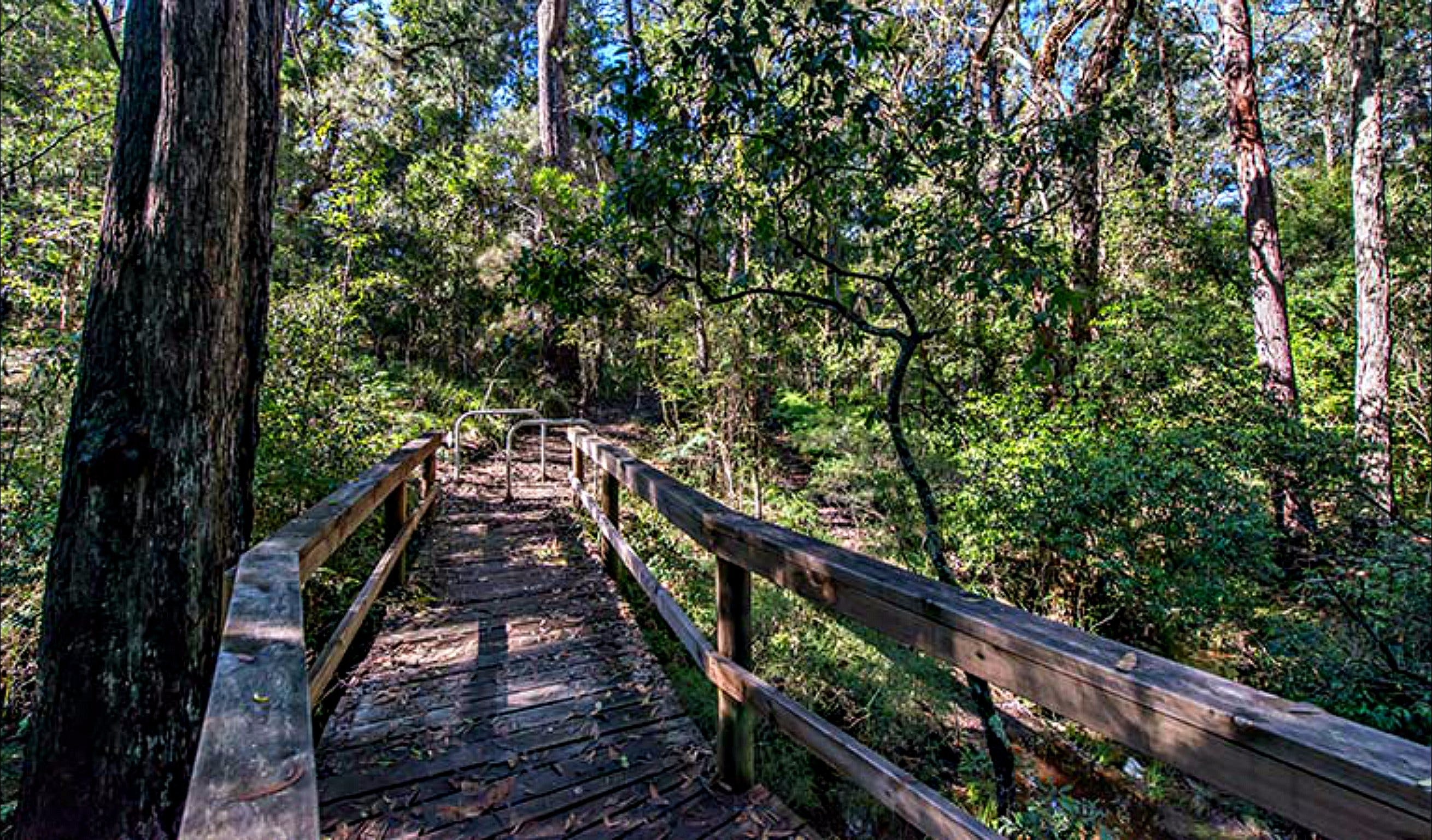 Dawson River Walking Track - Victoria Tourism