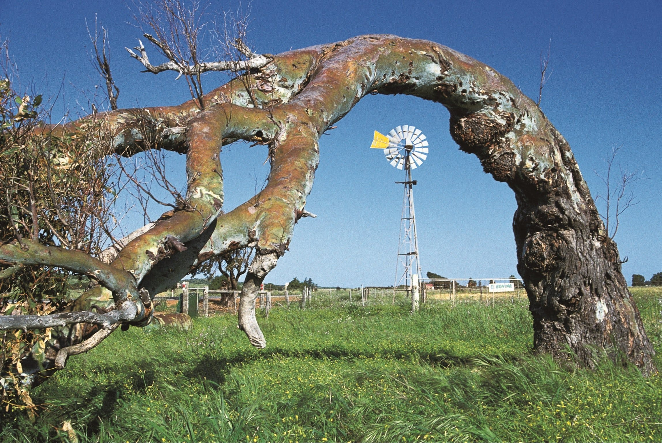 Greenough Leaning Trees - Victoria Tourism
