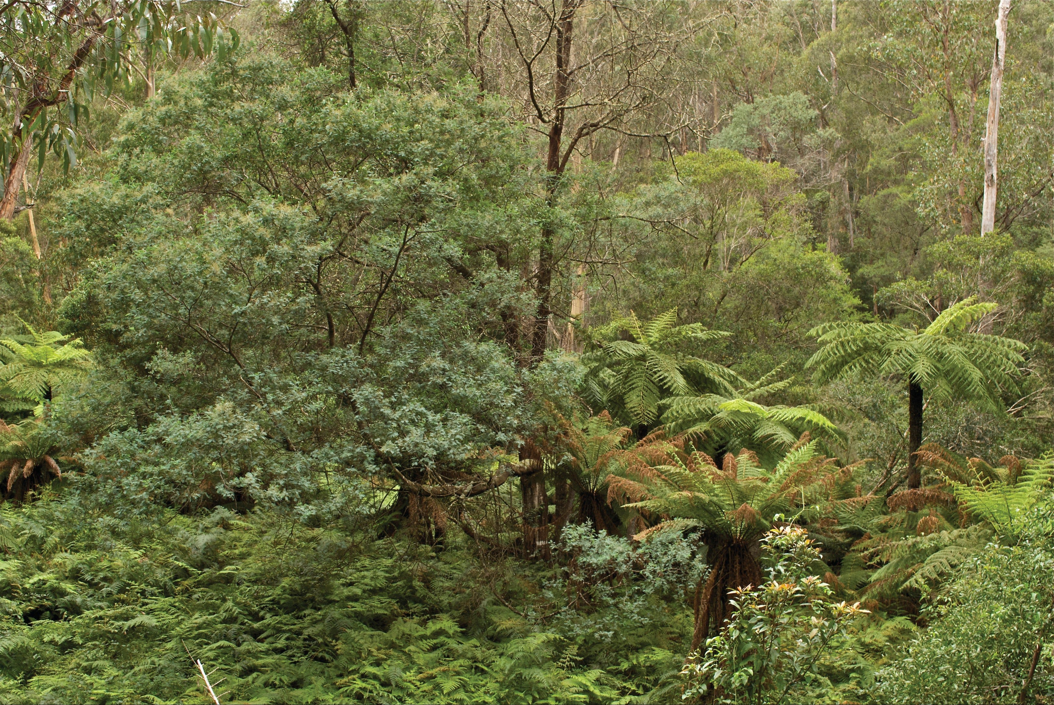 Lind National Park - Victoria Tourism