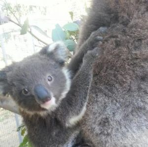 West Oz Wildlife Petting Zoos - Victoria Tourism