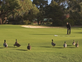 Royal Hobart Golf Club - Victoria Tourism