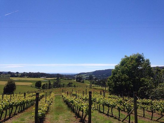 Barringwood Vineyard and Cellar Door Restaurant - Victoria Tourism
